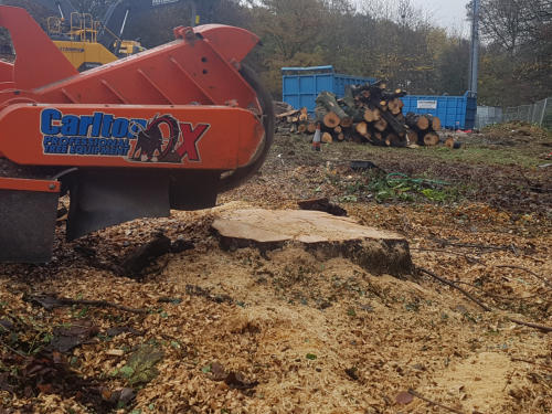 WSH Services - Tree Stump Grinding - Stump Removal